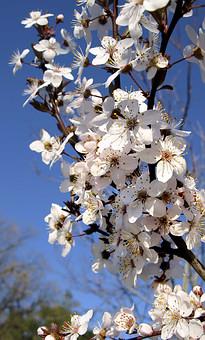 Цветёт весна